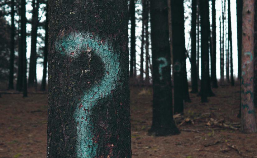 Sprejade frågetecken på träd i en skog.
